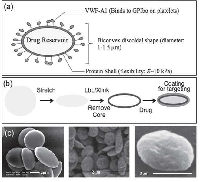Synthetic platelets offer potential benefits for platelet associated